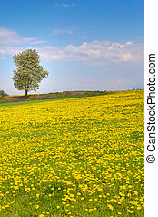 Dandelion meadow and alone tree
