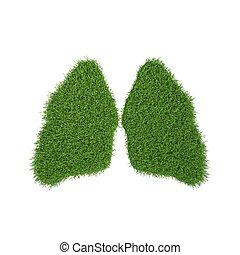 verde, pasto o césped, Pulmones, blanco, Plano de...