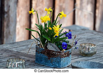 easter table decoration - bouquets of daffodils as easter...