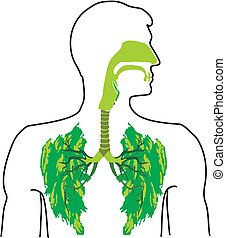 green lung - in the open air - lung disease, fresh air,