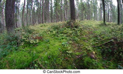 green foliage in forest .taiga