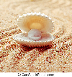pearl on the seashell . The exotic sea shell . treasure from...
