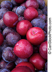 Plum fruit with water dripping on their