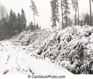 pile coniferous branch