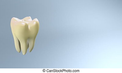 process of yellow tooth to white - The process of health...