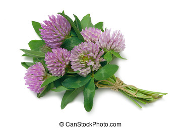 Herb Series Red Clover - Red Clover medicinal herb...