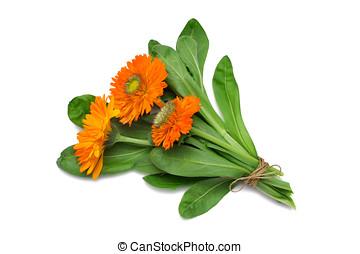 Herb Series Pot Marigold - Calendula officinalis - Pot...