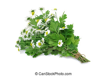 Herb Series Feverfew - Feverfew medicinal herb tied in a...