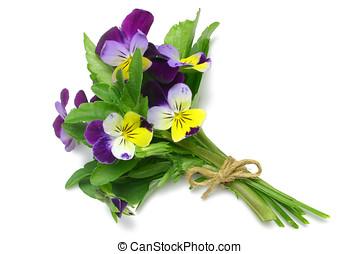 Herb Series Heartsease - Heartsease medicinal herb (Viola...