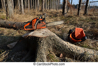 Spruce stump, chainsaw, forest - Lumberjack tools in the...