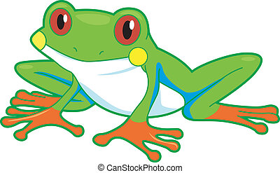 Rainforest Frog - Illustration of a Rainforest Frog