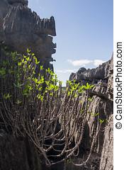 The Tsingy of Ankarana, northern Madagascar
