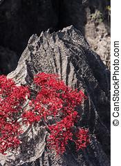 Tsingy of Ankarana Madagascar - Tsingy, geologic erosion of...