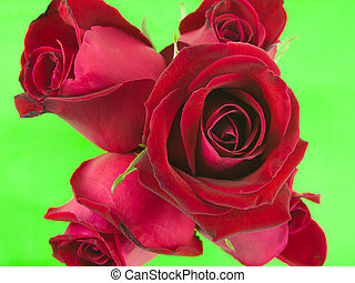Red roses on green screen