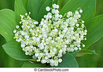 Lily of the valley convallaria majalis bouquet
