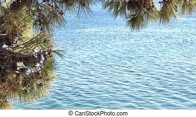 Blue Adriatic sea - View at blue Adriatic sea and pine tree