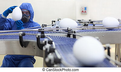 gmo factory - engineer examining xxl size egg at production...