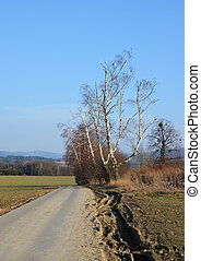 Contry road, birch trees - Road in countryside with birch...