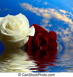 roses red and white flooding in water