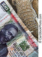 Banknotes - 100 shilling bill of Kenya