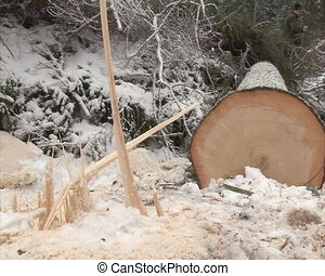 tree trunk stump snow - cut tree trunk stump and branches...