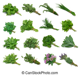 Herb Series Sampler - Herbs tied with twine. Isolated on...