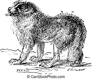 Newfoundland dog, vintage engraving. - Newfoundland dog,...
