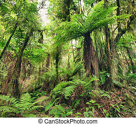 Fern tree - The New Zealand native bush Fern tree