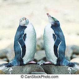 Yellow-eyed Penguins - Wildlife photo of a Yellow-eyed...