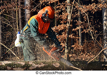 Cutting branches on spruce tree - Lumberjack cutting...
