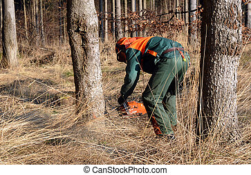 Woodcutter cutting tree down - Woodcutter cutting down...