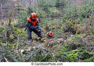 Forest worker - Woodcutter doing forest maintenance