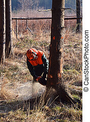 Lumberjack cutting standing tree - Lumberjack cutting down...