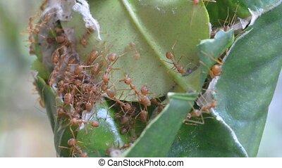 ants on tree footage