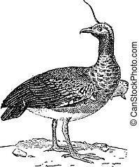 Kamichi or Horned Screamer (Anhima cornuta), vintage engraving.