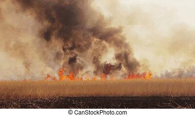 Wildfire in the fields timelapse