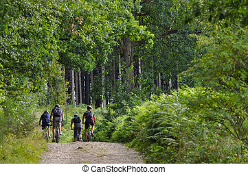 Mountainbikers in forest - Four mountainbikers biking in a...