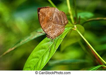 beautiful butterfly in garden