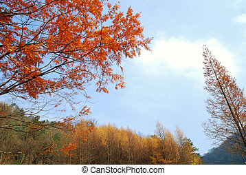 Sichuan, China, autumn leaves on the plateau