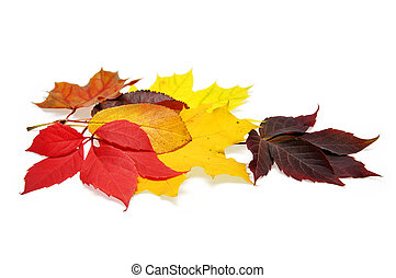 colorful autumn leaves over white background with clipping...