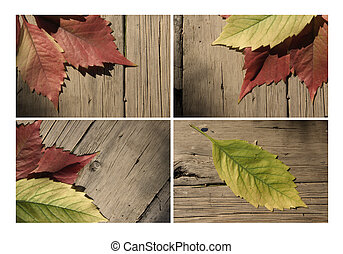 Autumn leaf collection for your design