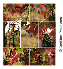 Autumn plants collection for your design
