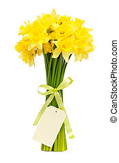 daffodils - bouquet of beautiful daffodils isolated on white...