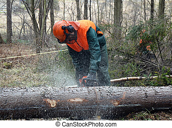 Lumberjack, tree cutting - Woodcutter cutting tree trunk in...