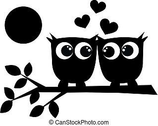 dois, corujas, Amor