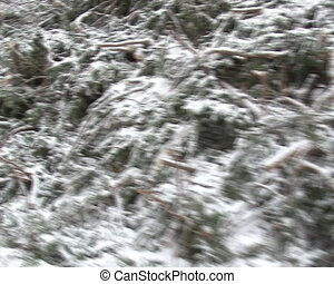 bunch coniferous branches