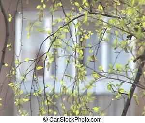 birch branch flat house
