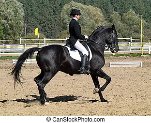 equestrian sportswoman riding black stallion horse in...