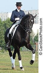 ecuestre, mujer, equitación, negro, semental, caballo