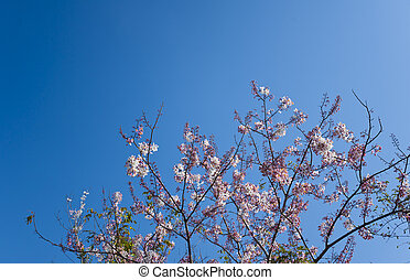 Flowers in spring with blue sky background